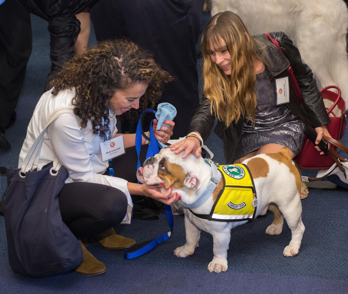 Banfield Pet Insurance - A Leader in Preventive Care