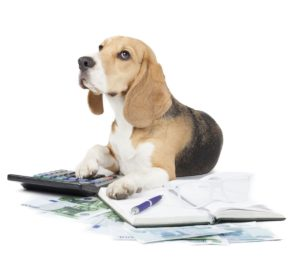 Buy Online Pet Insurance to Protect Your Pets