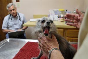 Insuring Your Exotic Pet