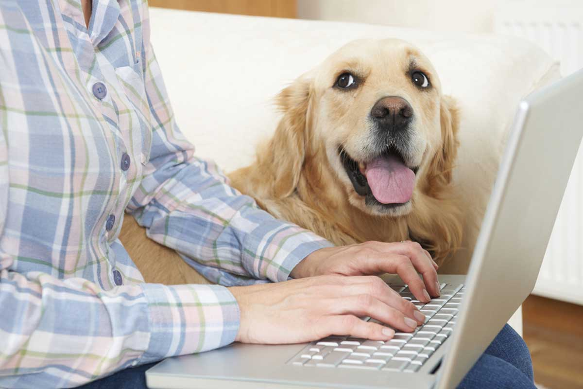 Low Cost Pet Insurance - Protection For Pennies a Day