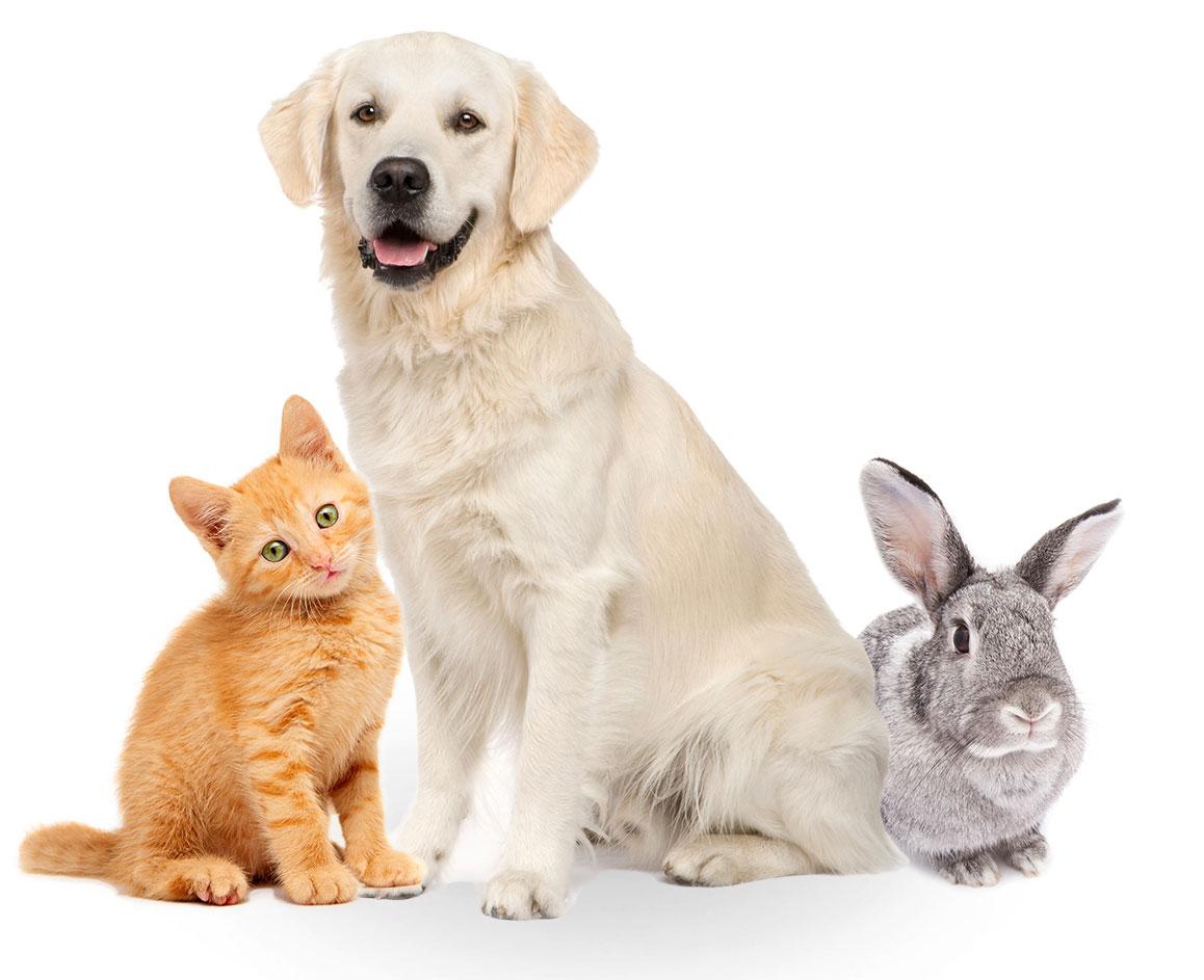 Pet Insurance Companies - Friend Or Foe?