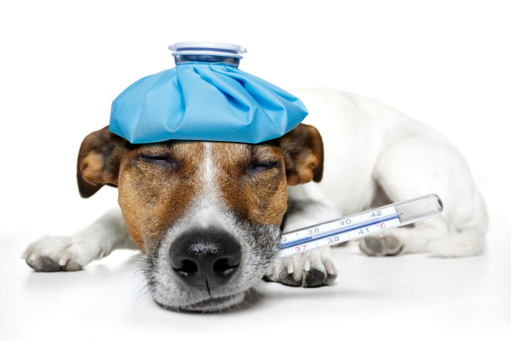 Save Thousands on Vet Costs - The Real Deal Behind Pet Health Insurance