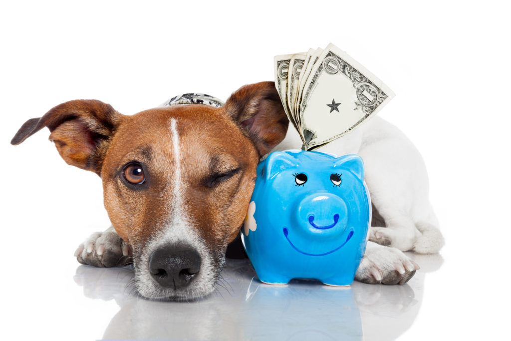 Speeding Up Pet Insurance Claims
